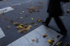 Jesse Marlow - Leica Q Campaign - 2015 // I like the subtle colours in this images, but more so the movement of the leaves and the man walking. It adds interest to the image and makes it more alive. Leica Camera, Marlow, Street Photographers, How To Dry Basil, Photo Art, Melbourne, Photography, Image, Fringes