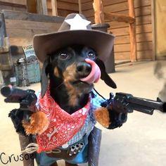 'Who you callin' a wiener?!' Crusoe the Celebrity Dachshund