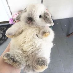Baby Animals Pictures, Cute Animal Pictures, Cute Baby Bunnies, Cute Babies, Cutest Bunnies, Cutest Pets, Cute Little Animals, Cute Funny Animals, Fluffy Animals