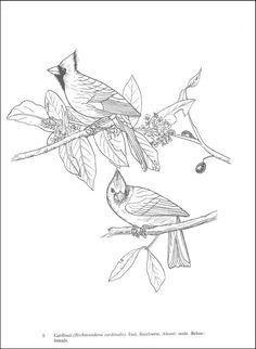 ausmalbilder, malvorlagen - papagei kostenlos zum ausdrucken   märchen aus aller welt, der