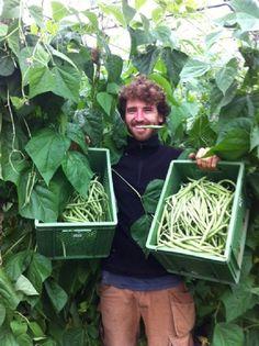 Einer der Gärtner mit einer Kisten voller Bohnen. Foto: Kartoffelkombinat