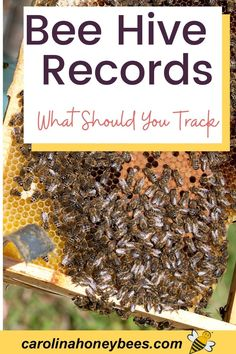 How To Start Beekeeping, Beekeeping For Beginners, Bumble Bee Nest, Backyard Beekeeping, Beekeeping Course, Vertical Planting, Bee Facts, Buzzy Bee, Bees And Wasps