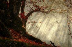 雨の音 自然の力 自然 高解像度で壁紙