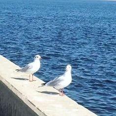 Я влюбилась😌☀️ #чайки ❤️