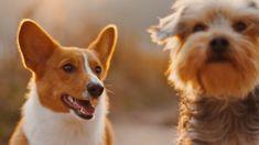 """AVA (Agir pour la Vie Animale) s'engage pour la protection des animaux de compagnie en difficulté et lutte contre les euthanasies dites """"de confort"""" qui sont proposées à tout va par certains vétérinaires ou demandées par certains maîtres."""