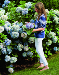 Blue-and-White Aerin Lauder - Aerin Lauder Hamptons Home - House Beautiful