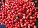 Rose semplici: Il pepe rosso può giovare ai pomodori