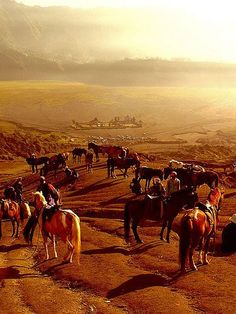 Horses and The Poten at Mount Bromo, Java, Indonesia