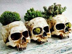 skull planters: Great for day time Halloween decoration. Indoor Garden, Indoor Plants, Outdoor Gardens, Herb Plants, Mini Plants, Diy Plante, Skull Planter, Gothic Garden, Skull Decor