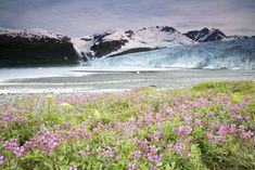 Travel   Alaska   Attractions   Things To Do   Free Things   Hidden Gems   Adventure   Towns     Road Trips   Last Frontier   Natural Beauty   Hiking   Day Trips   Alaska Itineraries   Bucket List   Train Travel   Fishing   Boat Travel   Car Travel   Alaska Photography   Wildlife Viewing   The Alaska Life   Only In Alaska   Alaska Weather   Alaska Beaches   Ocean   Rivers   Alaska Lifestyle   Mountains   Glaciers   History   Off The Grid   Restaurants