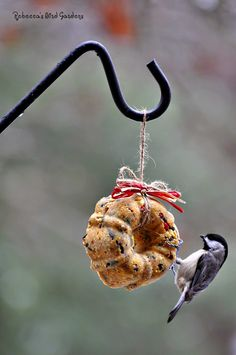 the garden-roof coop: Rebecca's Bird Gardens - DIY Miniature Suet Wreaths Homemade Bird Feeders, Diy Bird Feeder, Bird Suet, Bird Seed Ornaments, Bird Houses Diy, Bird Food, Backyard Birds, Pet Treats, Wild Birds