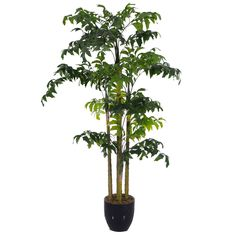2M Artificial Fishtail Kwai Palm 18 Leaves Small Palm Trees, Small Palms, Fishtail, Leaves, Plants, Plant, Braid, Planets
