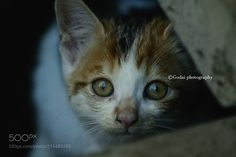 Street cats 288 - Please follow my twitter account:) https://twitter.com/godaiphotograph Godai photography  All photo rights are reserved Godai.