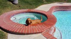 Bloodhound Swimming In Spa Pool Supplies, Bloodhound, Beach Mat, Outdoor Blanket, Spa, Swimming, Outdoor Decor, Hound Dog, Swim