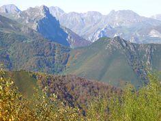 Bosque de Peloño. En el Parque Natural de Ponga entre Picos de Europa y el Parque Natural de Redes, se encuentra la Reserva Natural Parcial de Peloño.( El hayedo mejor conservado de la península Ibérica).