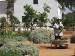 Cape Fusion Tours offers Cape Town Food Tours, Cape Wine Tours & scenic tours of the Cape. Taste the Cape on a Cape Town Food Tour in South Africa Cape Town, South Africa, Places To Visit, Tours, Plants, Plant, Places Worth Visiting, Planting