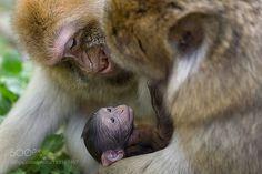 Baby by AlainMartin4 #animals #animal #pet #pets #animales #animallovers #photooftheday #amazing #picoftheday