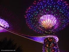 Singapur hat beides zu bieten, Großstadt und Dschungel, ganz nah beieinander. Entdecke Chinatown, künstliche Bäume und den Urwald in der Stadt.