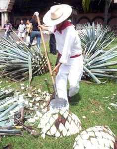 Tequila, Jalisco. The historic place where tequila was born...