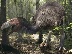 Gastornis is an extinct genus of large flightless birds that lived during the late Paleocene and Eocene epochs of the Cenozoic era. Initially thought to be a predator, new theories suggest this large bird may have been a herbivore.