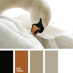 This monochrome color palette boasts of unique swan colors. Light shades, starting from write and up to grey brown, provide a background for bright contrast black and ginger brown elements of decoration. This color solution can be used in a kitchen or another room. In any case it will look very creative.