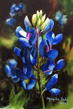 Monika Pate | WATERCOLOR | Bluebonnet 1