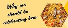 Zlato od našich včeličiek : Prečo by sme mali vzdať chválu našim včelám . Ice Tray, Bee, Honey Bees, Bees