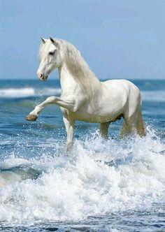 White horse paddling in the sea. Cute Horses, Pretty Horses, Horse Love, Nature Animals, Animals And Pets, Cute Animals, Horse Photos, Horse Pictures, Most Beautiful Horses