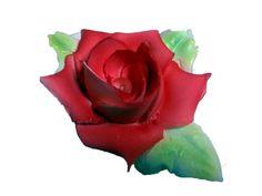 la rose de loulou