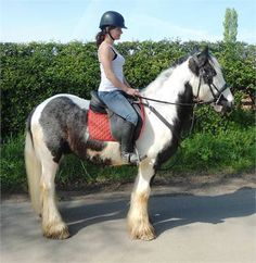 cyril - 14.3hh totally safe and easy irish cob http://www.equineclassifieds.co.uk/Horse/143hh-totally-safe-and-easy-irish-cob-listing-782.aspx#.U42fl3YTCZY