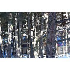 Pine grove at @archazor_chimgan #Chimgan. #WestTiangShang   #mountains #camping #nature #travel #hiking #pine #traveling #rocks #tourism #advanture #outdoor #traveler #tracking #photo #photography #BestMountainsArtists #фото #поход #горы #природа #туризм #путешествия #чимган #кемпинг #скалы #хайкинг