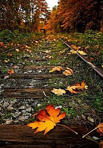 New Photography Nature Fall Leaves Beauty 40 Ideas Amazing Photography, Art Photography, Wedding Photography, Photography Business, Travel Photography, Digital Photography, Photography Courses, Photography Backdrops, Fall Displays