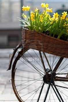 old bicycle with basket of flowers in the street of Helsinki, Finland