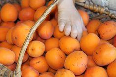 Premier département français producteur d'abricots : la Drôme !!