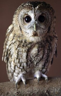 <b>Everyone's talking about superb owls!</b>