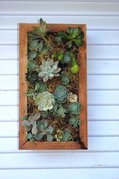 Wall garden project