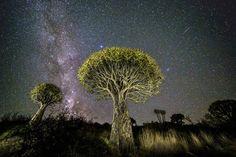 """""""Des arbres en bois d'aloès et une étoile filante"""""""