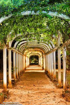 Jardim Botanico Covered Path, Rio de Janeiro. #WesternUnion #Rio2 http://www.riomovies.com/