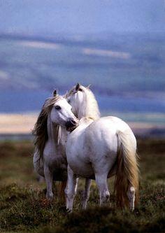 White horses...