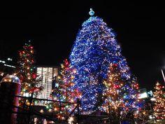 I love Christmas lights!