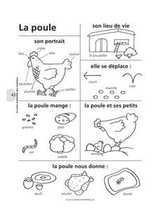 French Words about a Poule . Science For Kids, Science Activities, Life Science, French Language Lessons, French Lessons, French Class, French School, Colegio Ideas, French Worksheets