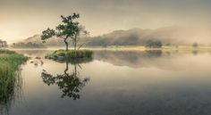Rydal Tree by Colin Bell