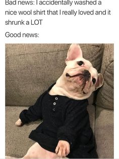 """Twenty-Three Animal Memes Because, Well, They're Better Than People Memes - Funny memes that """"GET IT"""" and want you to too. Get the latest funniest memes and keep up what is going on in the meme-o-sphere. Funny Animal Pictures, Funny Images, Funny Photos, Funny Animals, Cute Animals, Happy Memes, Daily Funny, Wholesome Memes, Bad News"""