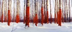 Russian Red exhibition  http://laznia.pl/aktualnosciart,709,2013_jurij_wasiliew_russian_red.html