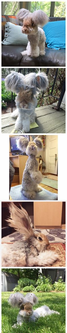 Is this really a rabbit