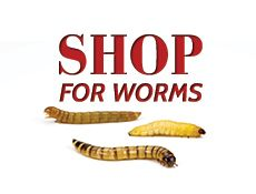 armstrong cricket worms through mail