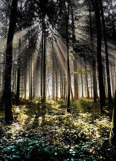 Morgens im Wald II by Johann Klugkist on 500px