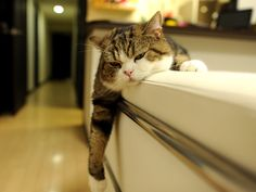 Maru:[Because I played with the toy of the pole intensely, I am tired very much.]