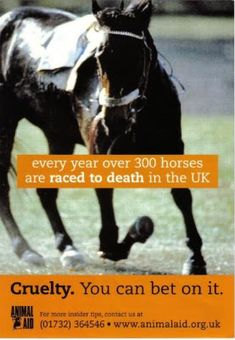 Animal Aid has produced a series of revealing reports over the last seven years exposing the welfare problems associated with Thoroughbred breeding, racing, training and disposal of commercially 'unproductive' horses. Our research indicates that around 420 horses are raced to death every year. About 38% die on racecourses, while the others are destroyed as a result of training injuries, or are killed because they are no longer commercially viable.