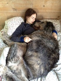 irish wolfhound spooning - dani would be a happy, happy camper!  @danielle Rapnikas